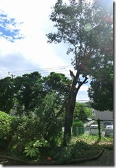 12.0.20 台風の被害②